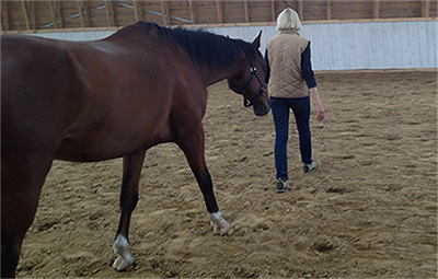 Horse Assisted Education