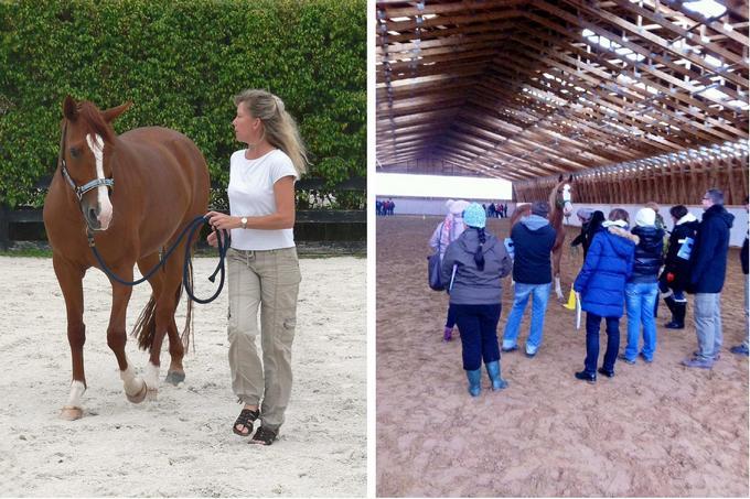 Coaching - szkolenie z koniem