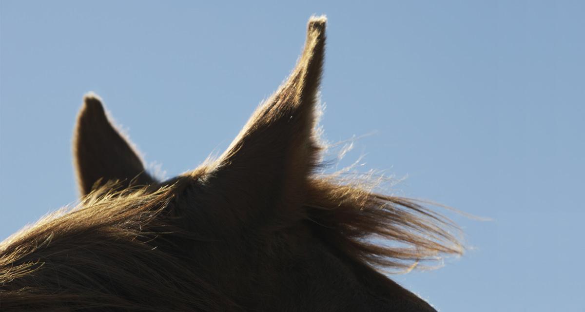 Koń - szkolenie z końmi